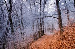 Morgenfrost (rofrhu) Tags: visitsteiermark visitgraz visitösterreich buchkogel strasgang raufreif freuf wald bäume baum laub winter nebel lieblingsfoto lieblingsplatzerl graz weis braun