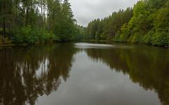 Unser Wald  (23) (berndtolksdorf1) Tags: deutschland thüringen wald teich wasser bäume outdoor