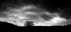 A Cloudy Day with Dramatic Skies Above (M.T.A.V) Tags: canon canoneos750d canon750d clouds cloud south sky dramatic storm stormy wind westsussex weather wet tree trees bw blackandwhite blackwhite monochrome light black white windy wood woodland eastdean countryside southdownsnationalpark southdowns
