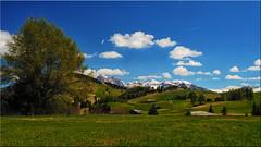 On the Alpe di Siusi in South Tyrol (Ostseetroll) Tags: geo:lat=4654115862 geo:lon=1164523976 geotagged ita italien kastelruth seiseralm südtirolaltoadige alpidisiusi alpen alps dolomiten dolomiti dolomites olympus em10markii trentinoaltoadige