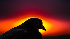 Eye - Closeness (Andrzej Kocot) Tags: sky art action surreallandscape andrzejkocot sunset eye colors skyline photography pov pigeon fineart surreal poland polska olympus omd sunsetmood light lightpainting landscape landscapes lowlight