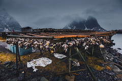 Fishing in Lofoten (yan08865) Tags: fish fishing cod mood snow sky lofoten mountains travel water lake lanscape pavlis mountain norway nordic arctic winter river nature wide photographers canon waterfront beauty earth calm le fog