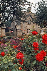 Honey-Colored Stone (AntyDiluvian) Tags: england uk unitedkingdom vintage 1973 1970s cotswolds cotswoldhills honeycoloredstone roses postoffice