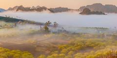 _MG_8281-83.1.0212.Tân Lập.Mộc Châu.Sơn La (hoanglongphoto) Tags: fog foggy thickgloom misty haze mists mist thickfog hoanglongphoto canoneos5dmarkii mộcchâu sơnla vietnam việtnam northvietnam northernvietnam vietnamlandscape scenery vietnamscenery mocchau landscape morning nature asia asian northwestvietnam naturelandscape mocchaulandscape sky vietnammountainouslandscape forest theforest earlyfrost earlymorningfog fogofmocchau sươngmùmộcchâu tâybắc tânlập sươngmù núi mountain phongcảnhthiênnhiên canonef24105mmf4lisusm sươngsớmmộcchâu sunshine sunny morningsunshine buổisáng nắng nắngsớm plumblossom hoamận hoamậnmộcchâu đồihoamận earlysunshine 1x2 village bảnlàng nhữngngôinhà manyhouses