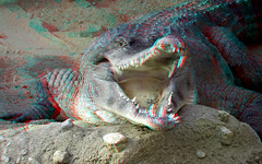 Crocodile Zoo Rotterdam 3D (wim hoppenbrouwers) Tags: crocodile zoo rotterdam 3d anaglyph stereo redcyan animal diergaarde blijdorp w3 chacha flickrunited