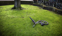 Portrait of Cambridge (PCPics (Paul Close)) Tags: cambridge uk quirky bicycle bike lawn tree