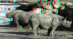 Rhino Blijdorp Zoo Rotterdam 3D (wim hoppenbrouwers) Tags: rhino blijdorp zoo rotterdam 3d anaglyph stereo redcyan lumix gf3 1442