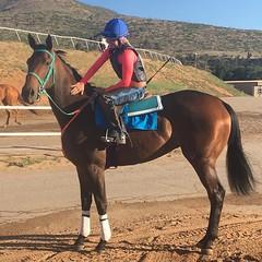 IMG_7566 (femalejockeys) Tags: jockeys female jockey horse racing thoroughbred sports athletes