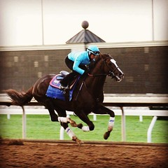 IMG_5813 (femalejockeys) Tags: jockeys female jockey horse racing thoroughbred sports athletes