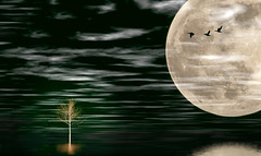 Solitude 709 (Wim Koopman) Tags: tree inverse silhouette full moon details surface birds goose geese flight flying surreal surrealism waves reflection flowing glowing