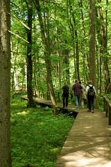 DSC05247 (imanh) Tags: bos marianheijboer pad iman imanh heijboer wood trail