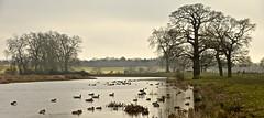 CROOME LANDSCAPE PARK (chris .p) Tags: croome landscape park nikon d610 worcestershire water ducks tree trees winter 2019 capture walk nt nationaltrust december view