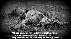 Matthew Brady pictures OF ANTIETAM (DREADNOUGHT2003) Tags: matthewbrady alexandergardner antietam sharpsburg civilwar union confederate csa usa maryland virginia war