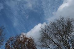 Winter Sky Cloudy And Tree Tops (Modkuse) Tags: trees sky clouds winter wintersky winterbeauty nature natural natureart photoart art artphotography artistic artisticphotography eterna fujifilmxh1eternasimulation fujifilm fujinon fujifilmxh1 xh1 xf1655mmf28rlmwr fujinonxf1655mmf28rlmwr sooc nopostprocessing straightoutofcamera outdoors cloudyday cloudy cloudscape
