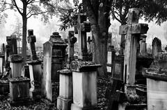 """""""Un cimetière en principe n'est pas une démocratie, cependant la mort est la démocratie suprême."""" (Neil Gaiman)  """"A cemetery in principle is not a democracy, however death is the supreme democracy."""" (Philippe Haumesser (+ 9000 000 view)) Tags: cimetière cemetery cimetières cemeteries croix cross statue statues arbre arbres tree trees noiretblanc blackandwhite monochrome nikond7000 nikon d7000 reflex 2019 pierrestombales graveyards colmar hautrhin 68 alsace elsass france"""