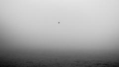 Leucothea / the price for freedom (Özgür Gürgey) Tags: 169 2020 50mm bw d750 elbe hafen hamburg leucothea nikon odysseus fog minimal mythology seagull