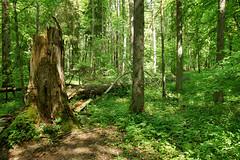 DSC05245 (imanh) Tags: bos iman imanh heijboer wood