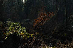 (Sietske de Graaf) Tags: pentax pentaxk50 vintageglass woodland woods bos forest light