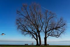 Fly, fly away ... (Honza 007) Tags: nature natur tree trees baum lake bird birds sky bluesky colours colour blue green black