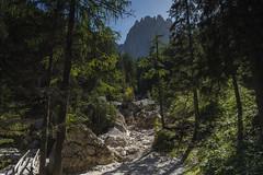 Alto Adige Italia Nature Outdoor sunny day 17092019 514''# (Dirk Buse) Tags: alto adige südtirol italien italia wald berge natur outdoor licht sonne grün reise travel mft m43 mu43