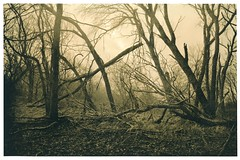 Distressed (Mark Dries) Tags: markguitarphoto markdries lith lithprinting moerscheasylith darkroomprint darkroom fujica gsw690 wideangle 65mm 6x9 mediumformat filmphotography trees retrobrom foma