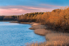 sunset on the lake (bożenabożena) Tags: landscape lake sky sunset trees reed nature krajobraz zachódsłońca niebo drzewa jezioro trzciny natura canonphotography poland