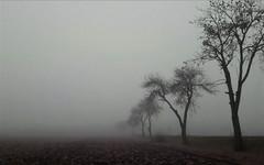 Eltűnnék innen nyomtalanul... (Sorokpolány) (milankalman) Tags: tree fog mist countryside winter greyscale mood