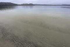 Ripples Under Still Water (brucetopher) Tags: pond water lake clear ripple ripples crystalclear transparent visibility seethrough still motionless fog cloudy texture pattern nature natural waterfront shallow coast shoreline shore beach freshwater fresh soft relaxing winter cold
