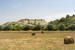 Rural landscape near Policoro, Basilicata (clodio61) Tags: basilicata europe italy july matera policoro rotondella southern agriculture bale calanques color country day field green hill land landscape nature outdoor photography plant road rural scenic summer sunny town tree