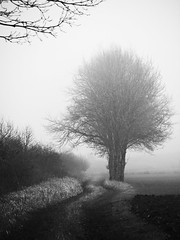 Into the fog (memories-in-motion) Tags: fog winter landscape black white mono tree path way grass mood ed frontpage moor olympus em5markiii leicadg100400f4063 photography mft