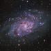 Messier 33 - Triangulum Galaxy HaLRGB (Urlaubsknipser) Tags: astrometrydotnet:id=nova3871982 astrometrydotnet:status=solved