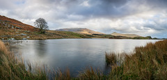 A view of Snowdon (William Rigby) Tags: panorama lake tree wales landscape reservoir snowdon snowdonia llyn northwales mountsnowdon llynydywarchen mountain snow mountains water reeds snowcapped panoramastitch