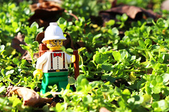 Dr. Kilroy Out for a Stroll in the Sun (TheMagikMaster) Tags: lego legominifigures legophotography toyphotography adventurers drkilroy scientist explorer hiking walkingstick strolling leisurelystroll greenery 11620