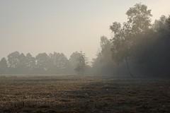 *** (pszcz9) Tags: przyroda nature natura naturaleza poranek morning mgła fog mist łąka meadow drzewo tree pejzaż landscape beautifulearth sony a77