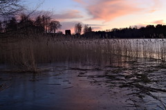 Evening by the lake (Stefano Rugolo) Tags: stefanorugolo pentax k5 pentaxk5 kmount kepcorautowideanglemc28mm128 manualfocuslens manualfocus manual vintagelens landscape evening lake 2020 reeds ice reflections sky branches colors exposure clouds water barn