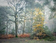 The bald and the beautiful (Ingeborg Ruyken) Tags: ochtend morning sunrise 500pxs natuurmonumenten boxtel natuurfotografie autumn fall kampina herfst