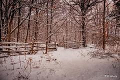 Winterlude (Anymouse02) Tags: snow fall winter pristene white sunrise season