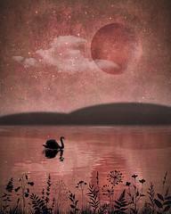 swan lake (Hal Halli....happy everything!!) Tags: lake pond morning dusk sunset kubistika nature moon water silhouette