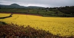 Llanfeilo dros y caeau (Rhisiart Hincks) Tags: tirlun landscape fields caeau cymru wales powys breconshire brycheiniog llanfeilo llanfilo melyn yellow rape rêp