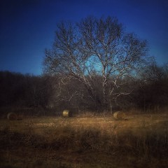"""Nothing gold can stay...."" (Sherrianne100) Tags: painterly tree haybales robertfrost rural gold ozarks missouri"