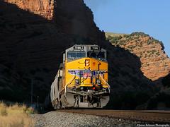 Cloaked in Shadow (jamesbelmont) Tags: unionpacific grain grainempty echocanyon utah evanstonsub ge ac4400cw shadow light train railroad railway locomotive gspxmu
