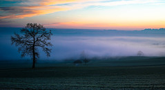 a new day is dawning (andre.kirtz) Tags: geltwil aargau nebel winter schweiz januar baum morgenstimmung freiamt natur landschaft
