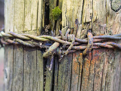Knot (Zog the Frog) Tags: red barbedwire knot fencepost moss colours stains lichen