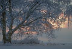 It seems to me... (RdeUppsala) Tags: birch abedul björk tree árbol träd ricardofeinstein cielo sky himmel winter vinter invierno ice is hielo snö snow nieve naturaleza nature natur landscape landskap paisaje atardecer sunset skymning uppland uppsala sverige sweden suecia escarcha evening tranquil twilight tranquilo fridfullt