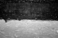Gocce (michele.palombi) Tags: florence mugnone tuscanyitaly analogicshotonfilm35mm riflessi pioggia