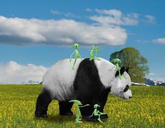 Poor Panda Getting Harassed by the little Loik Devils (ClaraDon) Tags: photoshop manipulation panda