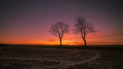 Winter Sonnenuntergang und Venus (fotobagaluten.de) Tags: venus sunset sonnenuntergang landscape landschaft planet dusk winter season jahreszeiten trees bäume horizon horizont yellow gelb sky himmel