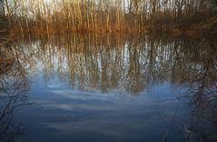 Ruminate (Matt Champlin) Tags: reflection life nature abstract january peaceful calm hike hiking canon 2020