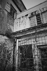 (a.pierre4840) Tags: olympus om2sp zuiko 24mm f28 35mmfilm ilford ilfordfp4 fp4 bw blackandwhite noiretblanc abandoned derelict ruined flower vignetting decay hongkong dof depthoffield selectivefocus fotor skylum luminar3