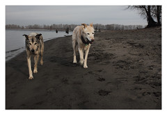 Beachcombers (Robert Drozda) Tags: portland oregon kellypoint kellypointpark willametteriver columbiariver sand beach dog wesley sandy tree river beinghere drozda